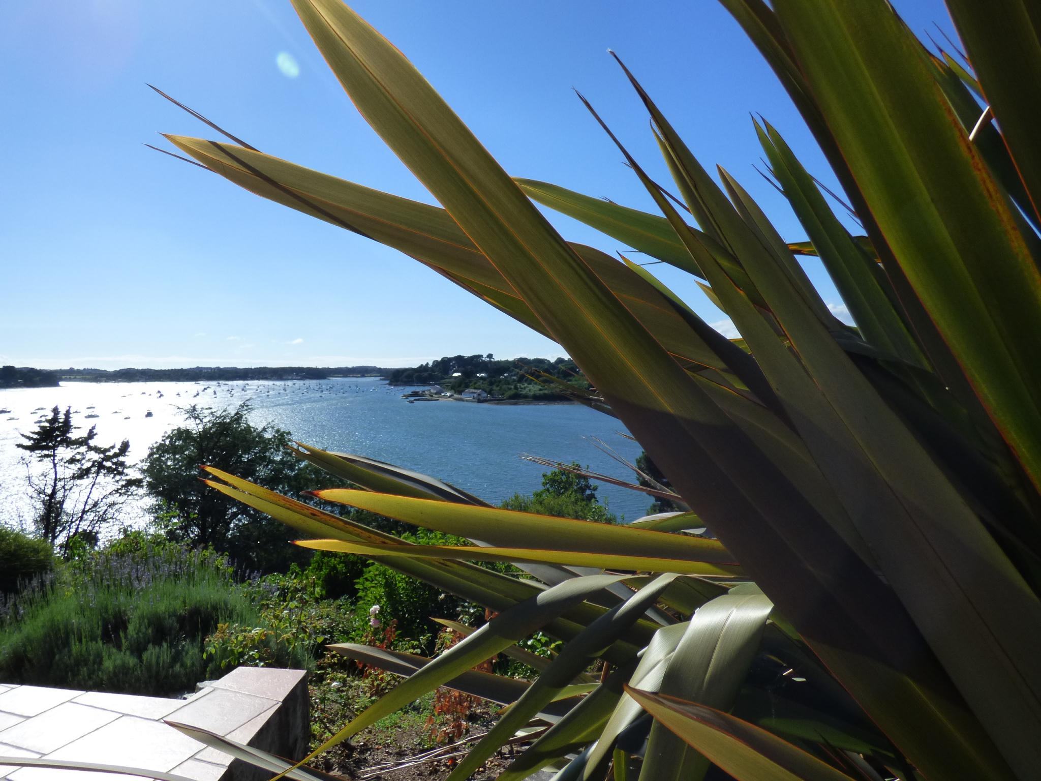 Vue panoramique sur le Golfe du Morbihan et ses îles